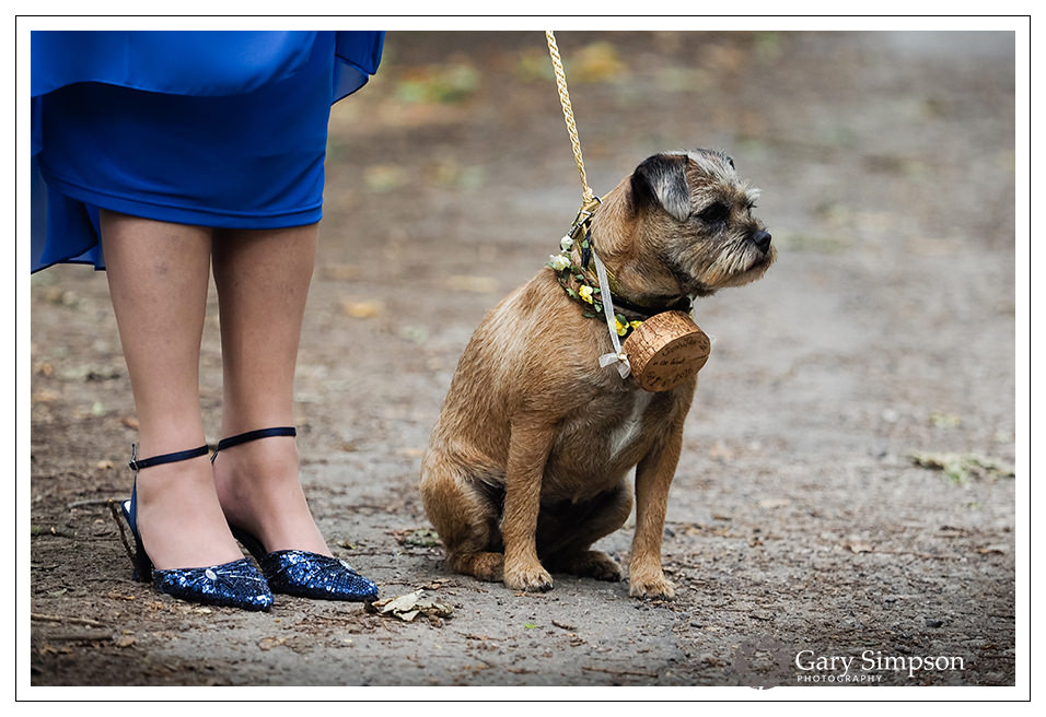 the family dog with the wedding rings
